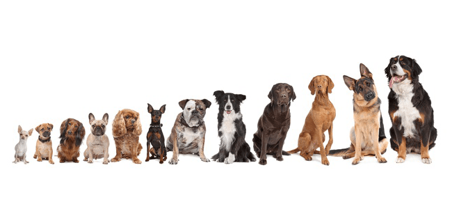 Dog Sizes - What's Right for Your Family