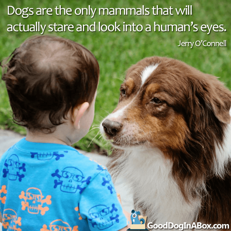 Dog quotes Jerry OConnell