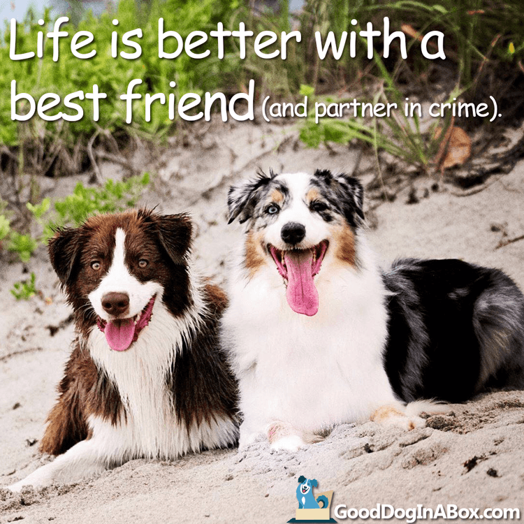 Dog Quotes Best Friends