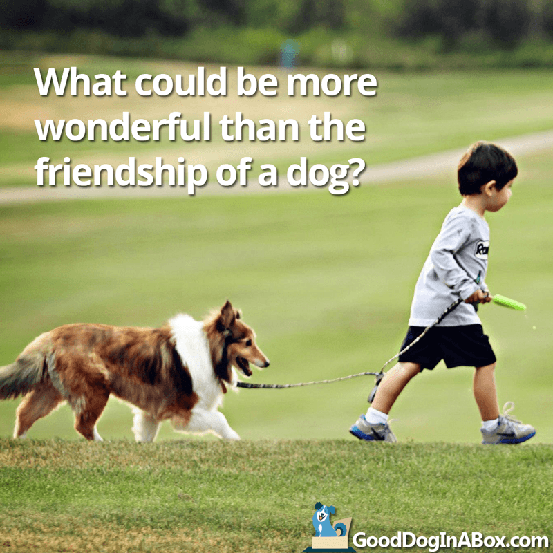 Dog Pictures Friendship Good Dog In A Box Awesome Quotes About Dog Friendship