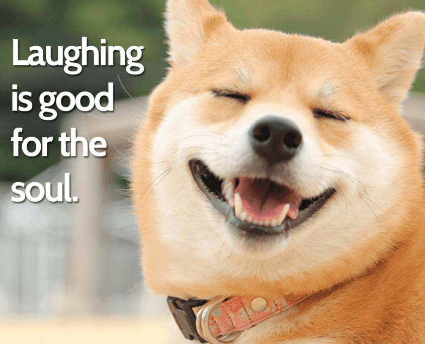 Dog Quotes Laughing