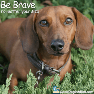 Dog Quotes Be Brave