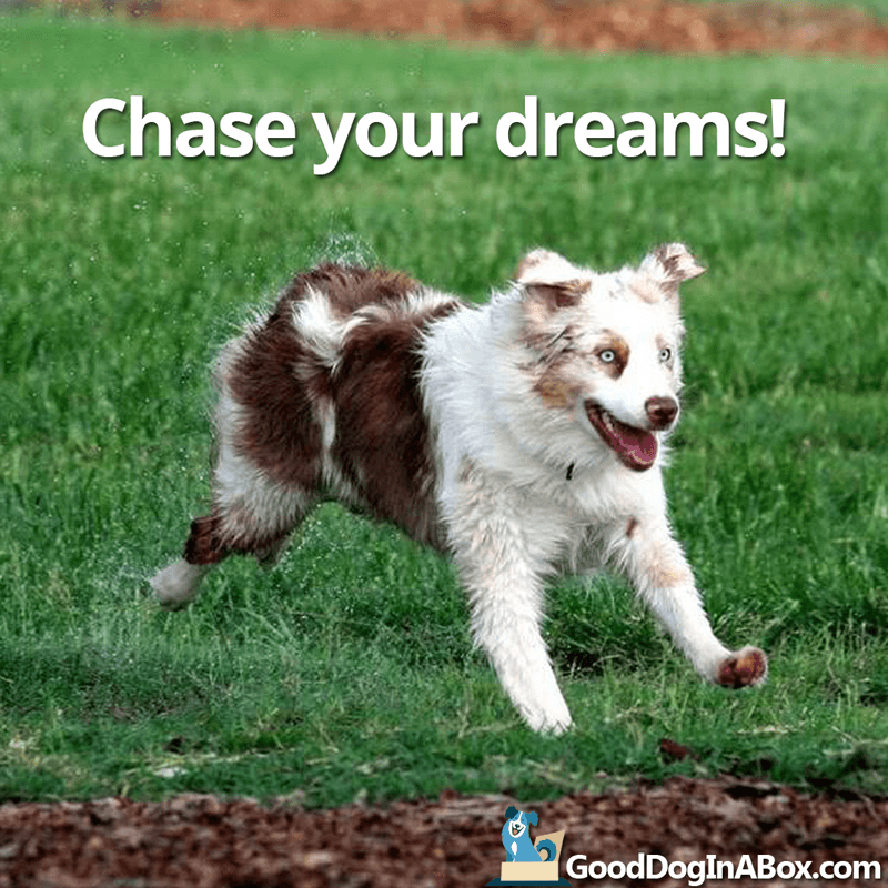 Dog Quotes Images Chase Your Dreams