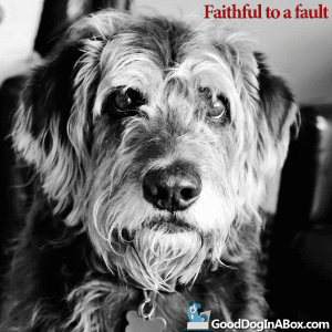 Dog Quotes Faithful to a Fault