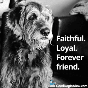 Dog Quotes Forever Friend