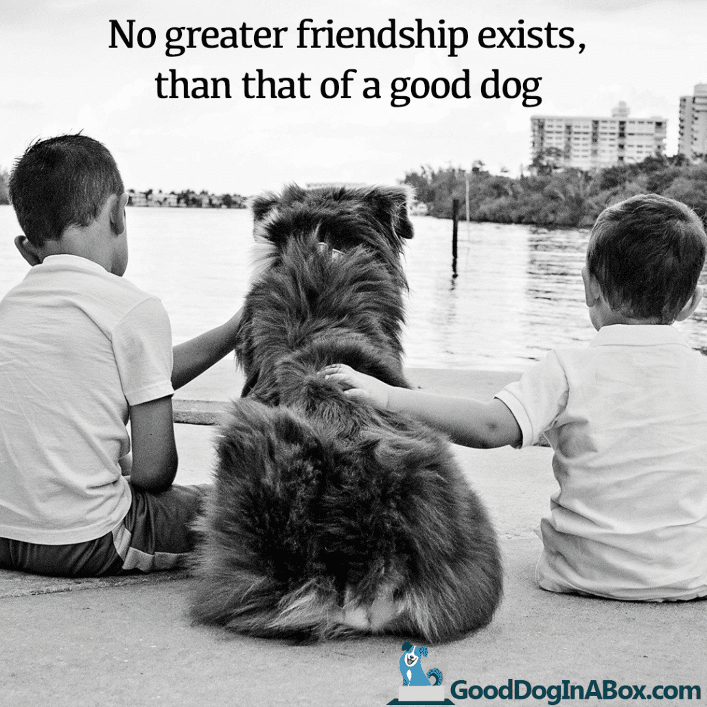 Quotes About Dog Friendship Delectable Dog Quotes Friendship  Good Dog In A Box