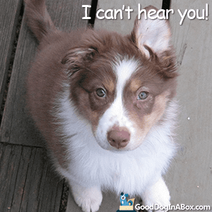 Dog Quotes - I Can't Hear You