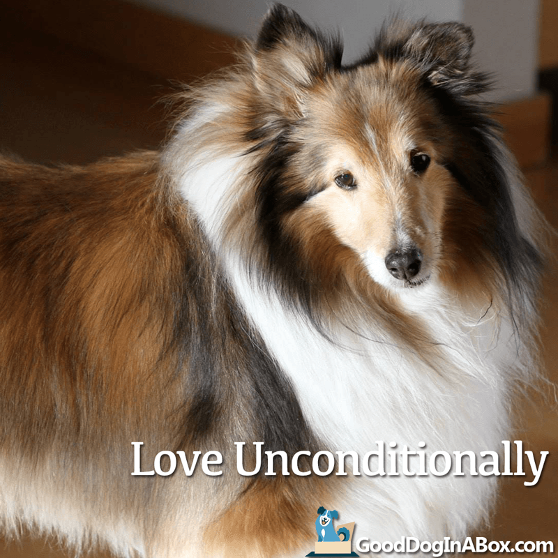 Dog Pictures Love Unconditionally