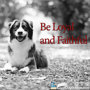 Dog Pictures Be Loyal & Faithful