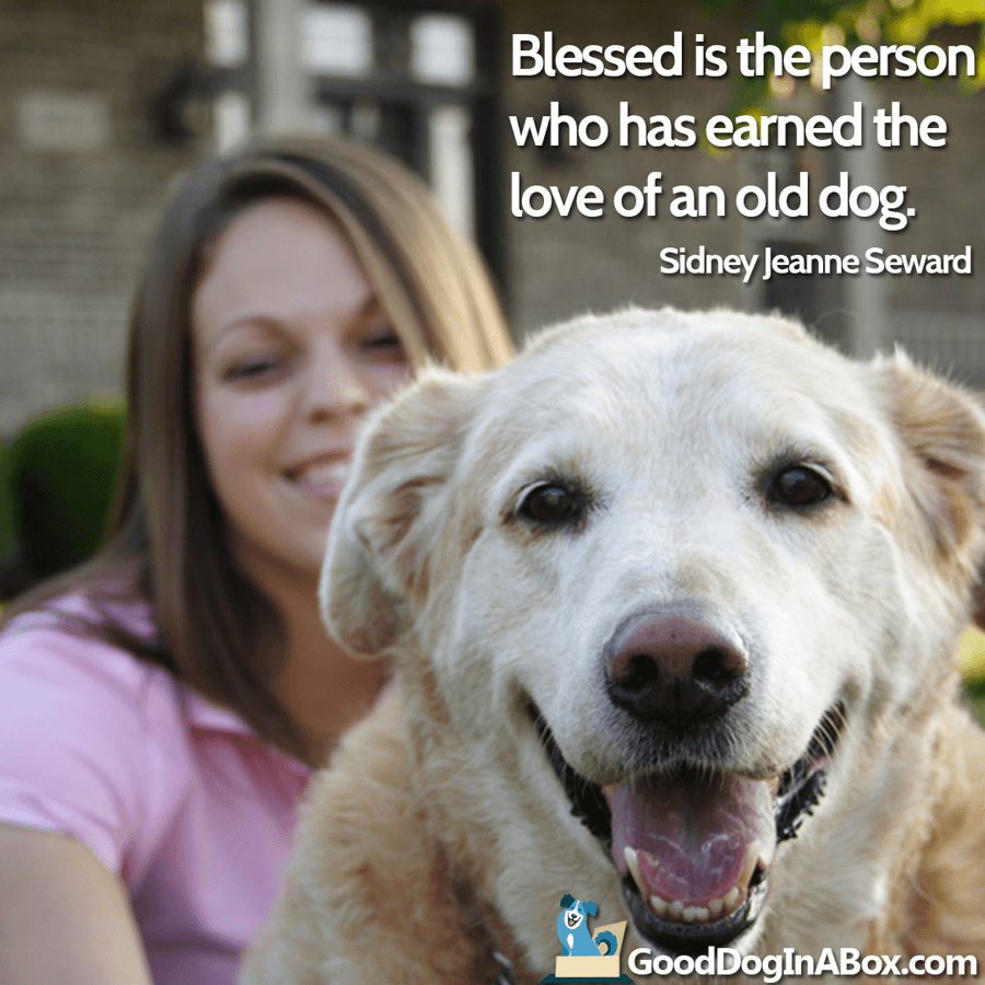 Dog Quotes - Old Dog