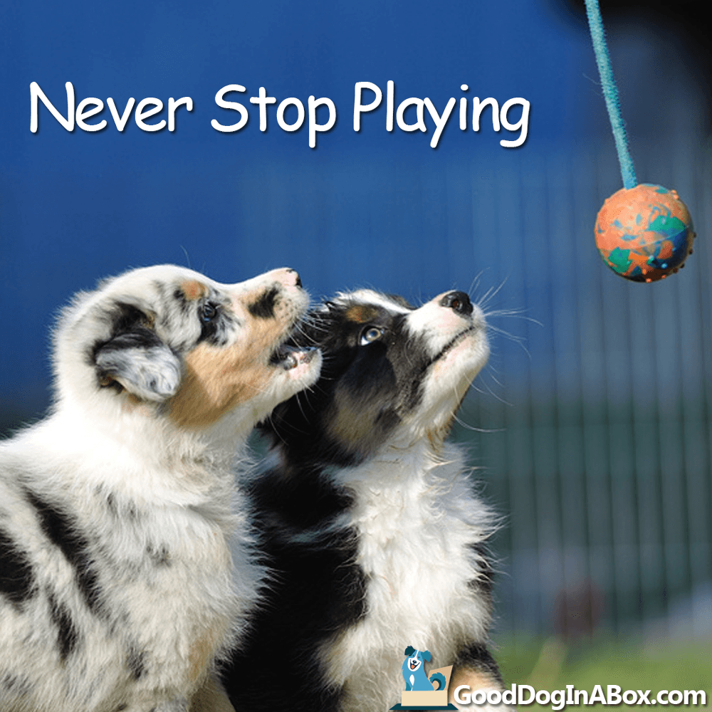 Dog Pictures - Playing