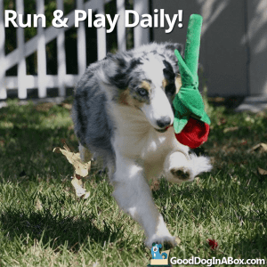 Dog Pictures Run and Play Daily