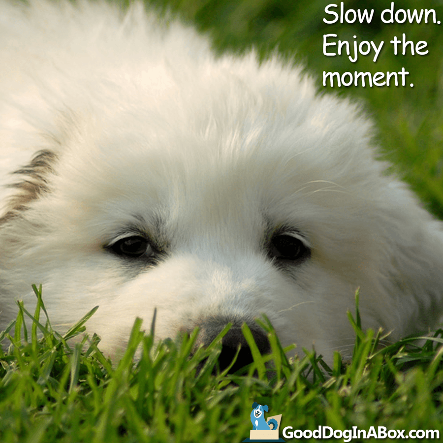 Dog Quotes - Enjoy the moment