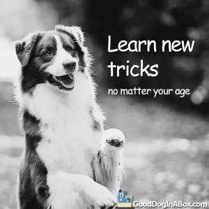 Dog Pictures Learn New Tricks