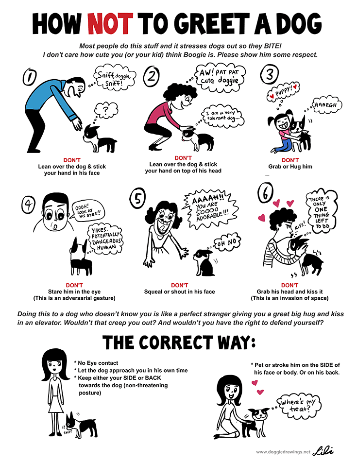 Dog Safety Greeting A Dog Infographic