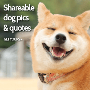 Shareable Dog Quotes & Dog Pictures