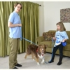 Walking with 4 and 6 foot nylon leashes