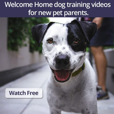 Welcome Home Video Series