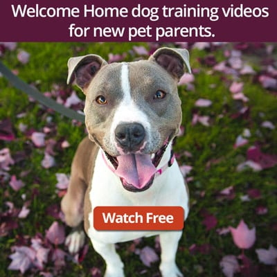 Welcome Home Dog Training Series