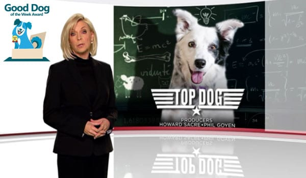 Chaser on 60 Minutes - Smartest Dog in the World