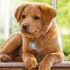 Thunder Cover Dog Tag Silcencer