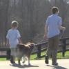 Balanced Leash Walking Good Dog in a Box