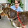 Halti Harness Good Dog in a Box