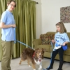 Leash Walking Good Dog in a Box