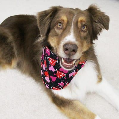 Reversible Dog Bandanas Handmade In The Usa Good Dog In