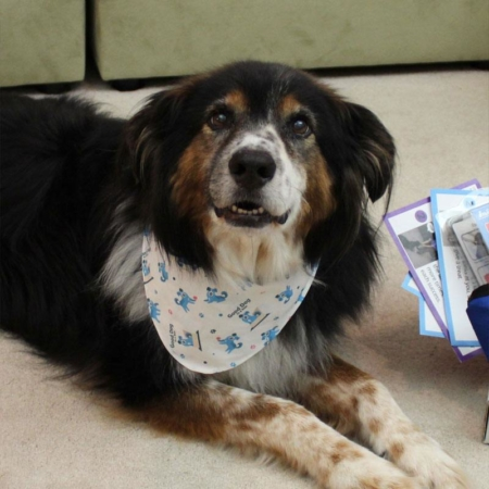 Good Dog in a Box Dog Bandana