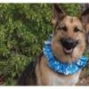 Reversible Ruffle Dog Collar