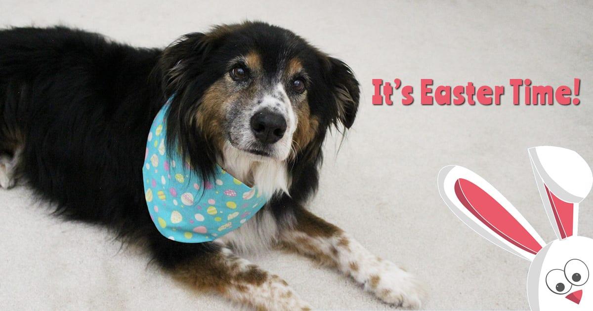 8b79ab81c8e Reversible Ruffle Dog Collars Handmade in the USA - Good Dog in a Box