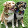 Reversible ruffle dog collars