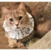 Ruffle Cat Collar