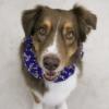 Handmade Christmas Ruffle Christmas Dog Collars