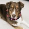 Handmade Reversible Ruffle Valentine's Day Dog Collar