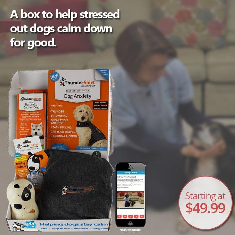 Calm Dog in a Box