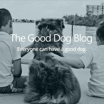 Good Dog Blog
