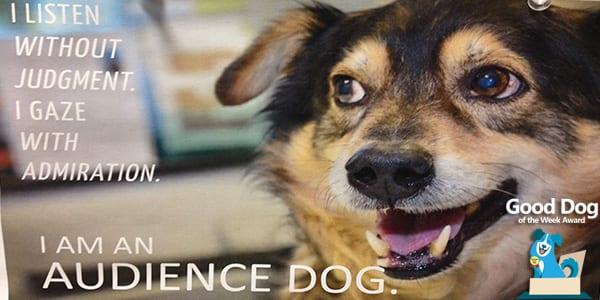 Kogod Business School Good Dog of the Week Award