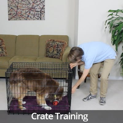 Welcome Home Crate Training Video