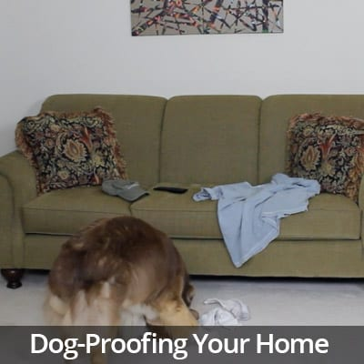 Welcome Home Dog-Proofing Your Home Video