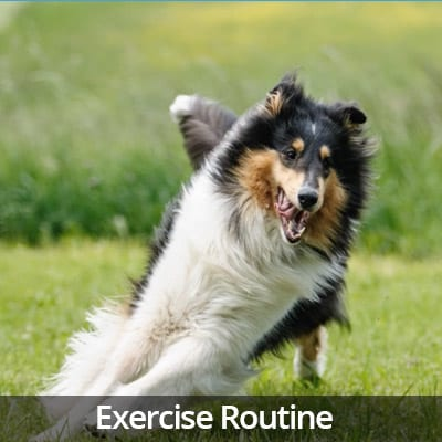 Welcome Home Exercise Routine Video