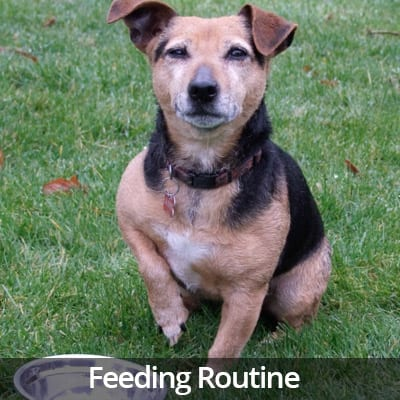 Welcome Home Feeding Routine Video