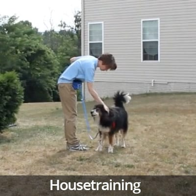 Welcome Home Housetraining Video