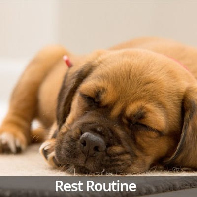Welcome Home Rest Routine Video