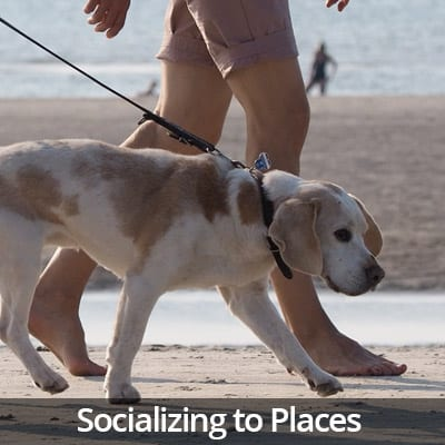 Welcome Home Socializing to Places Video