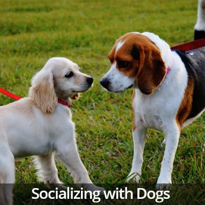 Welcome Home Socializing with Dogs Video
