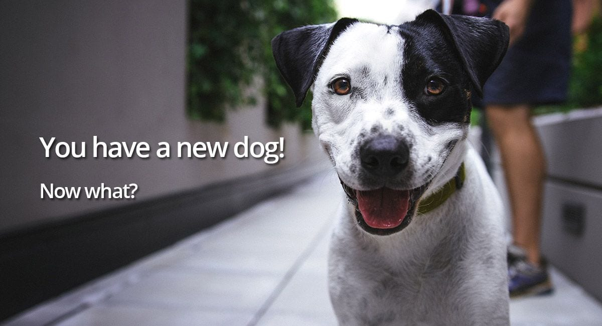 you-have-a-new-dog1