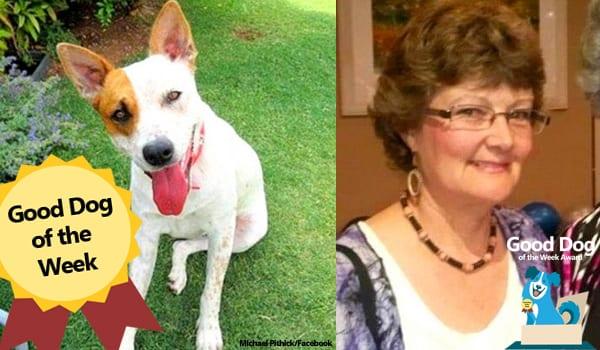 Abby the Red Heeler - Good Dog Award Winner