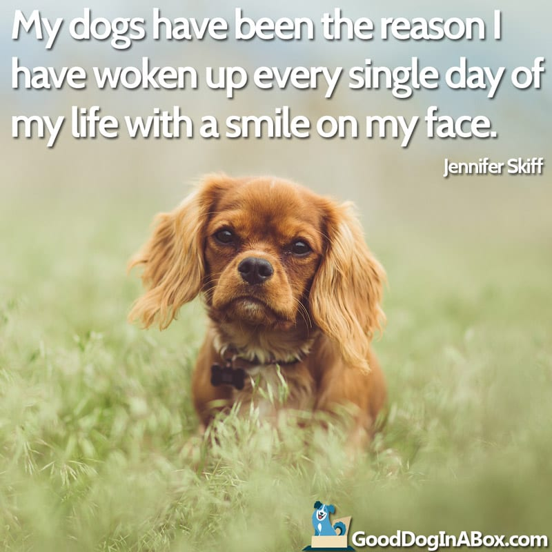 Dog Quote Cavalier King Charles Spaniel